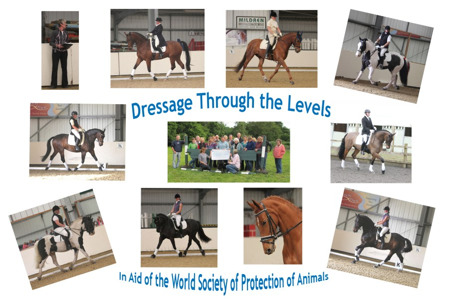 Dressage Through the Levels